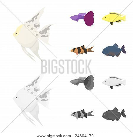 Botia, Clown, Piranha, Cichlid, Hummingbird, Guppy, Fish Set Collection Icons In Cartoon, Monochrome