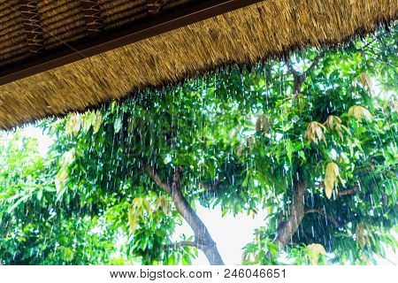 Tropical rain on straw roof as seen from shelter on tropical island