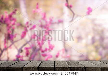 Empty Wooden Shelf On Sakura Background For Product Display