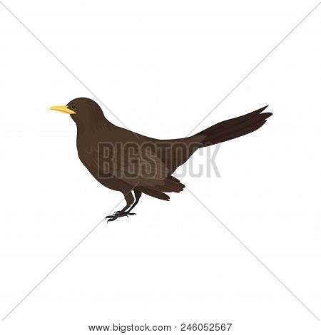 Icon of male blackbird. Wild bird with brown feathers, yellow beak and long tail. Fauna theme. Graphic design for ornithology book. Detailed flat vector illustration isolated on white background. poster