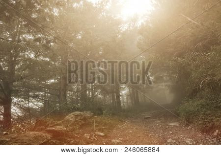 landscape of forest with mist and nobody on path