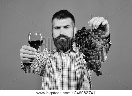 Winemaking And Autumn Concept. Winegrower With Strict Face Presents Product Made Of Grapes. Vintner