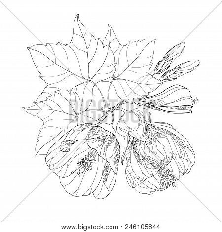 Vector Bouquet With Outline Black Abutilon Or Indian Mallow Flower, Bud And Leaf Isolated On White B