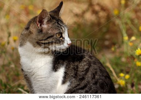 Portrait Of Feral White-brown Striped Cat In The Countryside. Photography Of Nature And Wildlife.