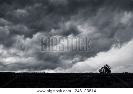 Dark Stormy Clouds Over The Plain, Lone Tree In The Field In Front Of A Thunderstorm. Danger Due To