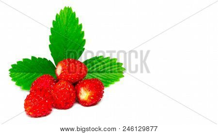 Wild Strawberry Isolated On White Background Closeup.