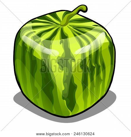 Square Watermelon Isolated On White Background. Modern Technologies In Agriculture.