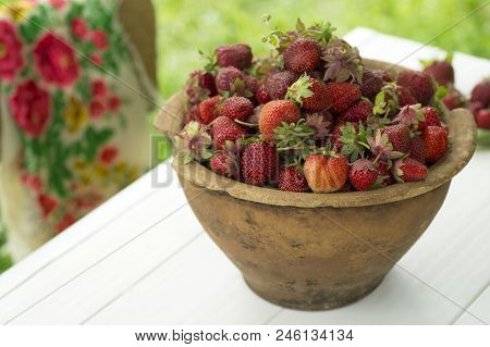 Old Ceramic Pot Full Of Fresh Red Strawberries And Clay On Canvas