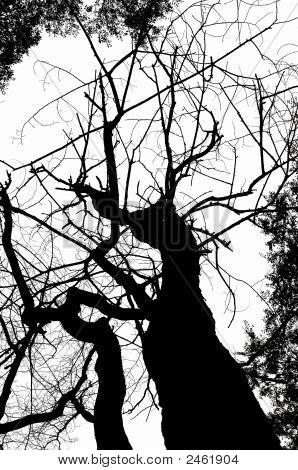 Dead Tree Silhouete