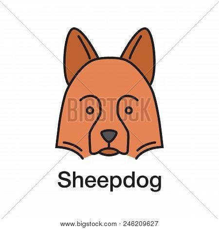 Shetland Sheepdog Color Icon. Herding Dog. Isolated Vector Illustration
