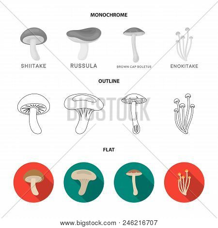 Shiitake, Brown Cap Boletus, Enokitake, Milk. Set Collection Icons In Flat, Outline, Monochrome Styl