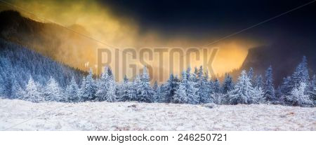 fairy tale winter landscape with snow covered firs at sunrise in the mountains, Ceahlau, Romania