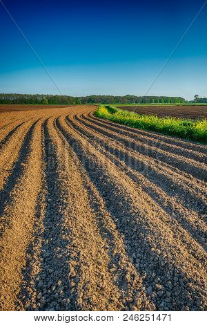 Vertical Image Of A Dramatized Blue Sky Over A Dutch  Field With Bent Potato Ridges  Of Clay Soil Wi