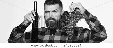 Winegrower With Strict Face Presents Product Made Of Grapes. Vintner Shows Harvest. Winemaking And A
