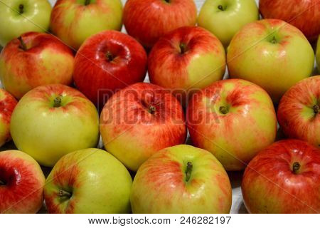 Red And Green Apples. Autumn Harvest. Health Food.