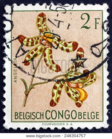 Belgian Congo - Circa 1952: A Stamp Printed In Belgian Congo Shows Leopard Orchid, Ansellia Africana