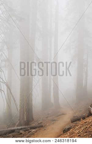 Mystery Forest In Dense Fog, Yosemite National Park, 4 Miles Trail