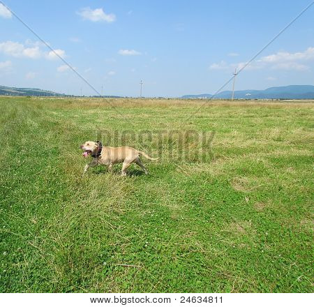 Dog playing in the grass