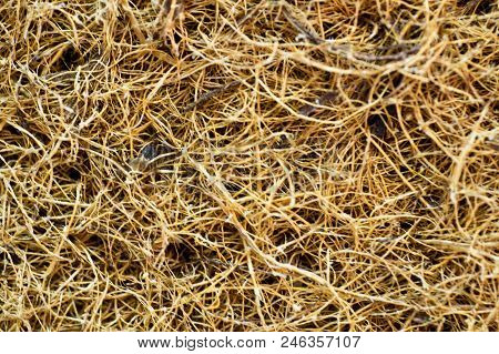 Coconut Coir. Grated Coconut Shell For The Production Of Mattresses. Texture, Natural Background. Co