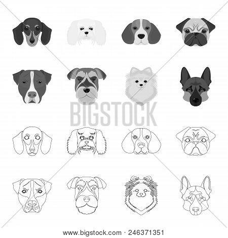 Muzzle Of Different Breeds Of Dogs.dog Breed Stafford, Spitz, Risenschnauzer, German Shepherd Set Co