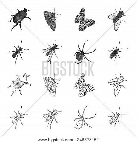 An Insect Arthropod, An Osa, A Spider, A Cockroach. Insects Set Collection Icons In Outline, Monochr