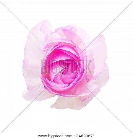 flower on white isolated background