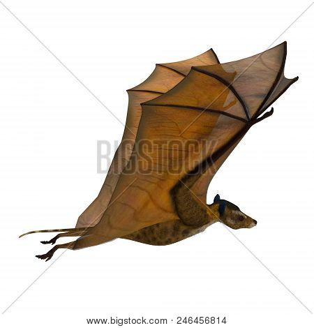 Icaronycteris Bat Wings Up 3d Illustration - Icaronycteris Index Is The First Bat Known To Science A