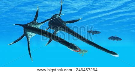 Styxosaurus Reptile Hunts Coelacanth Fish 3d Illustration - An Unlucky Coelacanth Fish Becomes Prey
