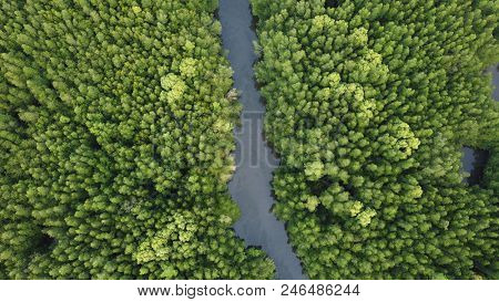 Mangrove forest aerial photo