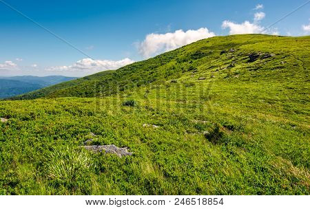 Alpine Meadows On The Mountain Top. Beautiful Summer Landscape