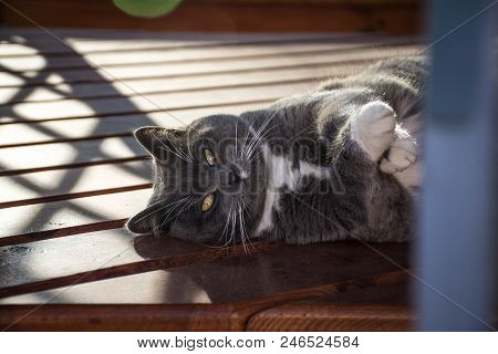 A disgruntled cat lies on one side and crosses his arms poster