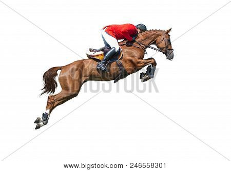 Rider In Red Jaket On Bay Horse In Jumping Show, Isolated On White Background