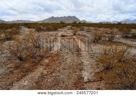 Vehicle Tracks Sonora Desert And San Tan Mountains In Central Arizona Usa