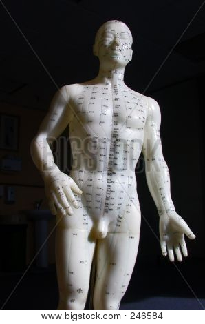 Acupuncture Model - Front