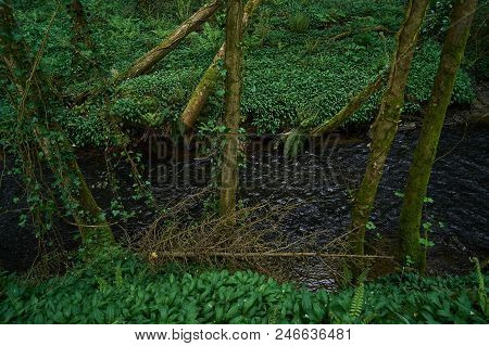 A River That Flows Through A Fresh, Spring-time, Green Forest.