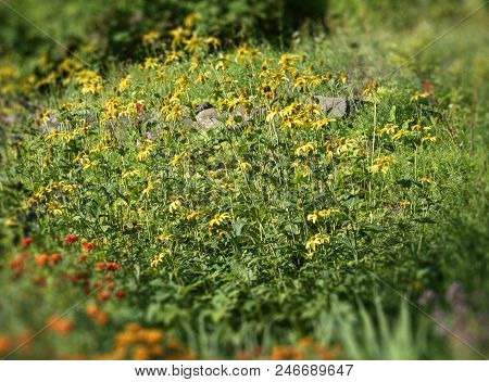 Yellow Flowers In A Forest Glade With A Slight Tilt Shift Effect