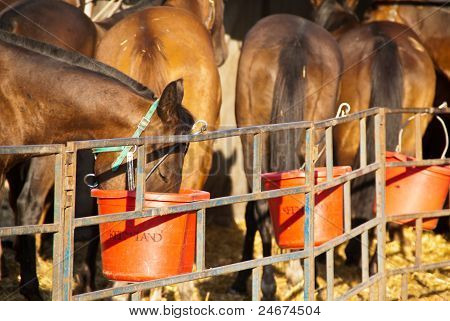 Horses At Feeding Time