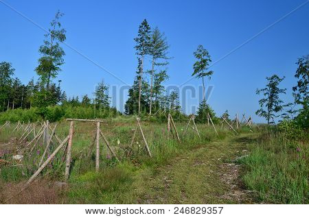the enclosure protects new trees, reforestation, South Bohemia, Czech Republic poster