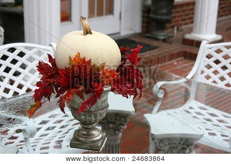 Beautiful White Fall Pumpkin