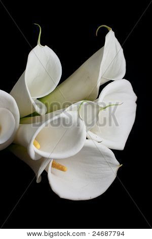 bouquet of calla lily