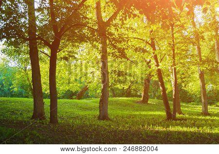 Spring Park Landscape, Colorful Spring Park In Sunny Weather At Spring Sunset