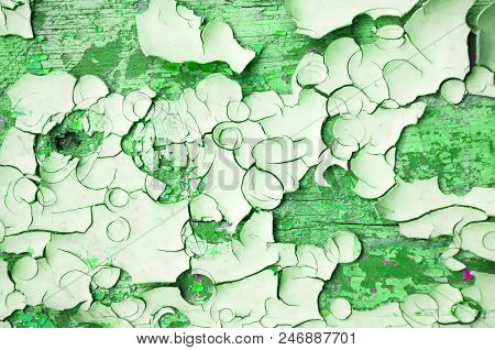 Texture Background Of Green Peeling Paint On The Wooden Texture Surface, Flaked Paint Closeup. Peeli