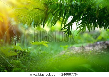 Fern Growing in summer garden. Beautiful  Green fern Leaves over blurred green bokeh background outdoors, nature. Gardening, landscaping design concept. 4K UHD video, slow motion