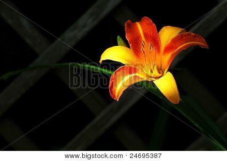Die orangen Blüten.