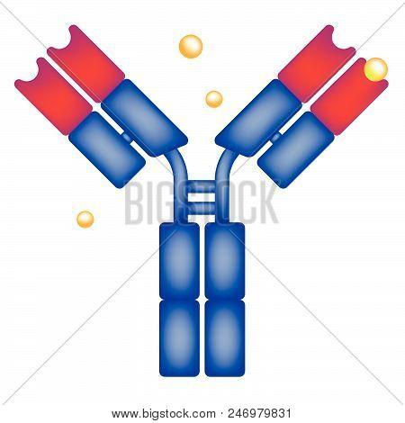 Drug Antigen Binding Antibody In The Human Body