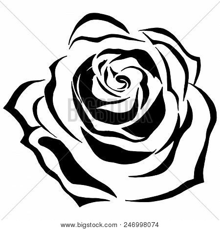 Black White Blooming Vector Photo Free Trial Bigstock