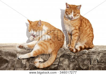 Two Red-headed Sleepy Cats Bask In Sun On Stone Fence And White Wall With Hard Shadows In Background