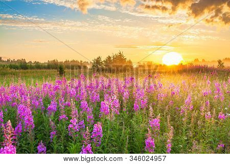 Beautiful Amazing Rural Landscape With Sunrise  And  Blossoming Meadow. Purple Flowers Flowering On