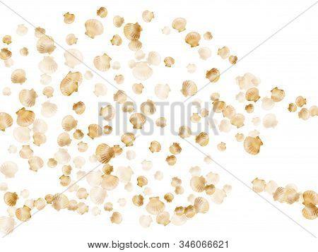 Gold Seashells Vector, Golden Pearl Bivalved Mollusks. Sea Scallop, Bivalve Pearl Shell, Marine Moll