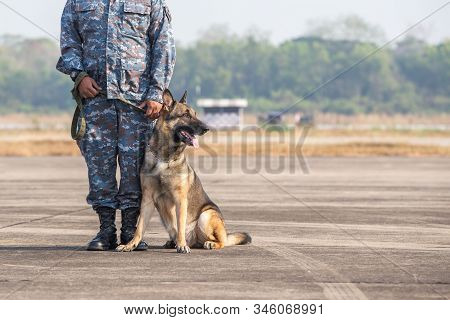 Smart Police Dog Sitting Outdoors. Brown German Sheepdog Sitting On Ground. Guard Dog, Police Dog
